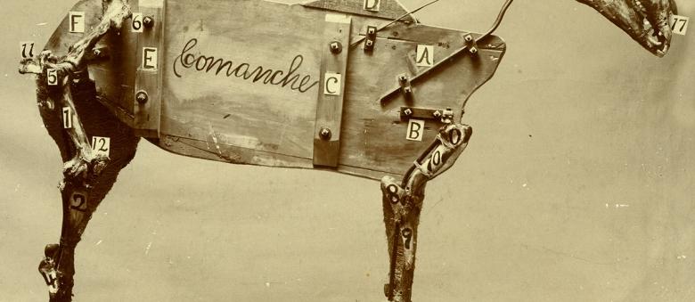 Chadwick Stokes – The Horse Comanche